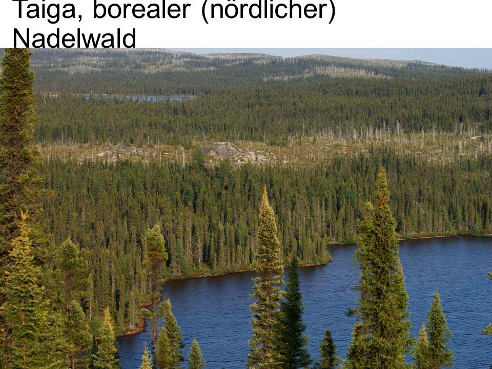 Taiga, borealer (nördlicher) Nadelwald