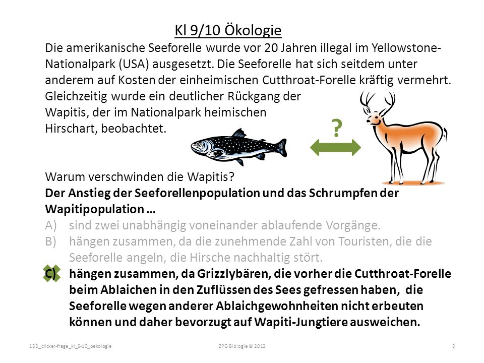 Die amerikanische Seeforelle wurde vor 20 Jahren illegal im Yellowstone- Nationalpark (USA) ausgesetzt. Die Seeforelle hat sich seitdem unter anderem