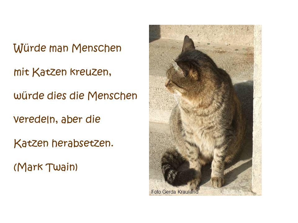 Foto Gerda Krauland Die Katze ist das einzige vierbeinige Tier, das dem Menschen eingeredet hat, er müsse es erhalten, es brauche aber dafür nichts zu tun.