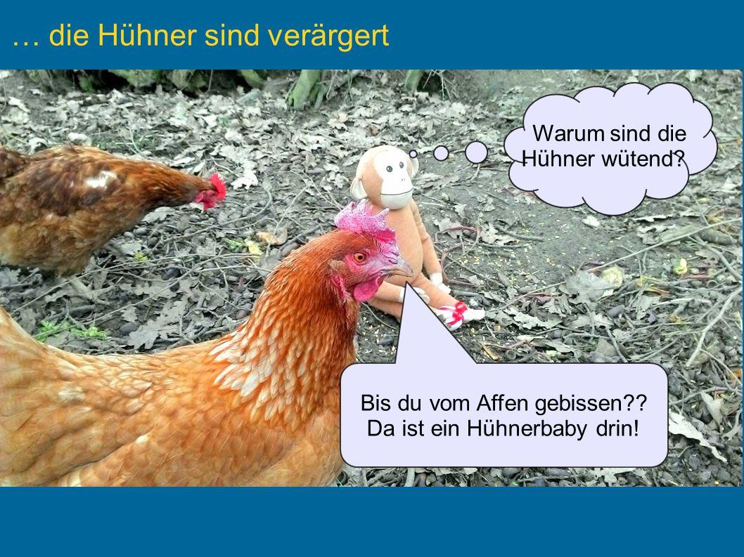Text Eingabefeld für Text Text Warum sind die Hühner wütend.
