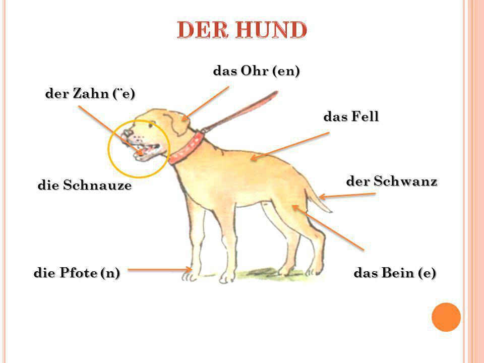 der Bernhardiner der Boxer der Schäferhund der Labrador der Pudel der Windhund
