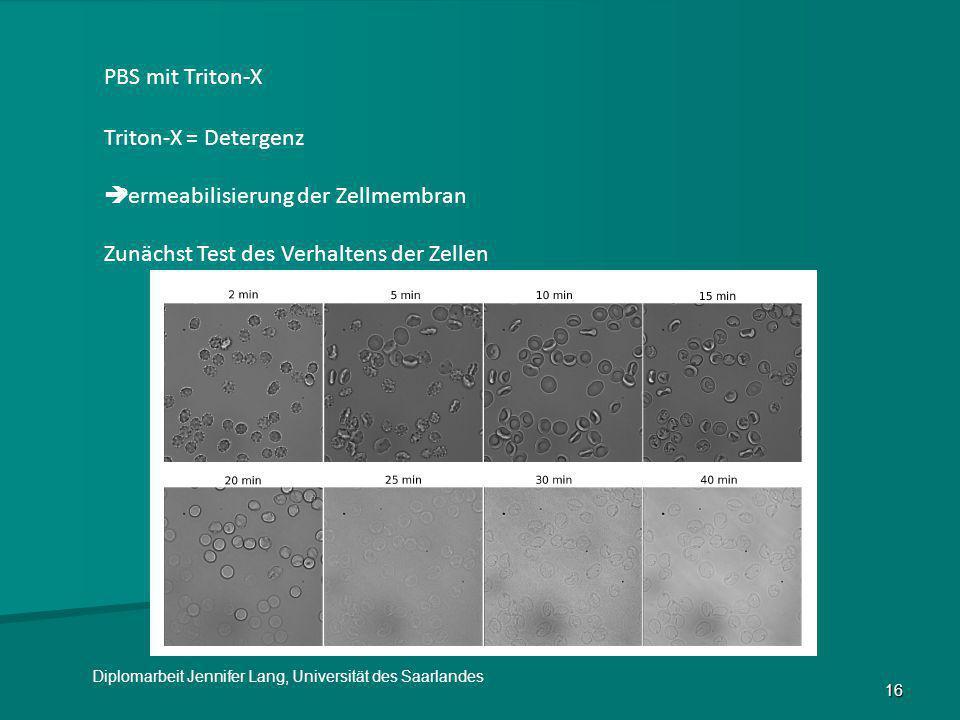 16 PBS mit Triton-X Triton-X = Detergenz  Permeabilisierung der Zellmembran Zunächst Test des Verhaltens der Zellen Diplomarbeit Jennifer Lang, Unive