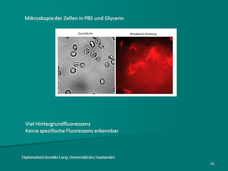 18 Mikroskopie der Zellen in PBS und Glycerin Viel Hintergrundfluoreszenz Keine spezifische Fluoreszenz erkennbar Diplomarbeit Jennifer Lang, Universi
