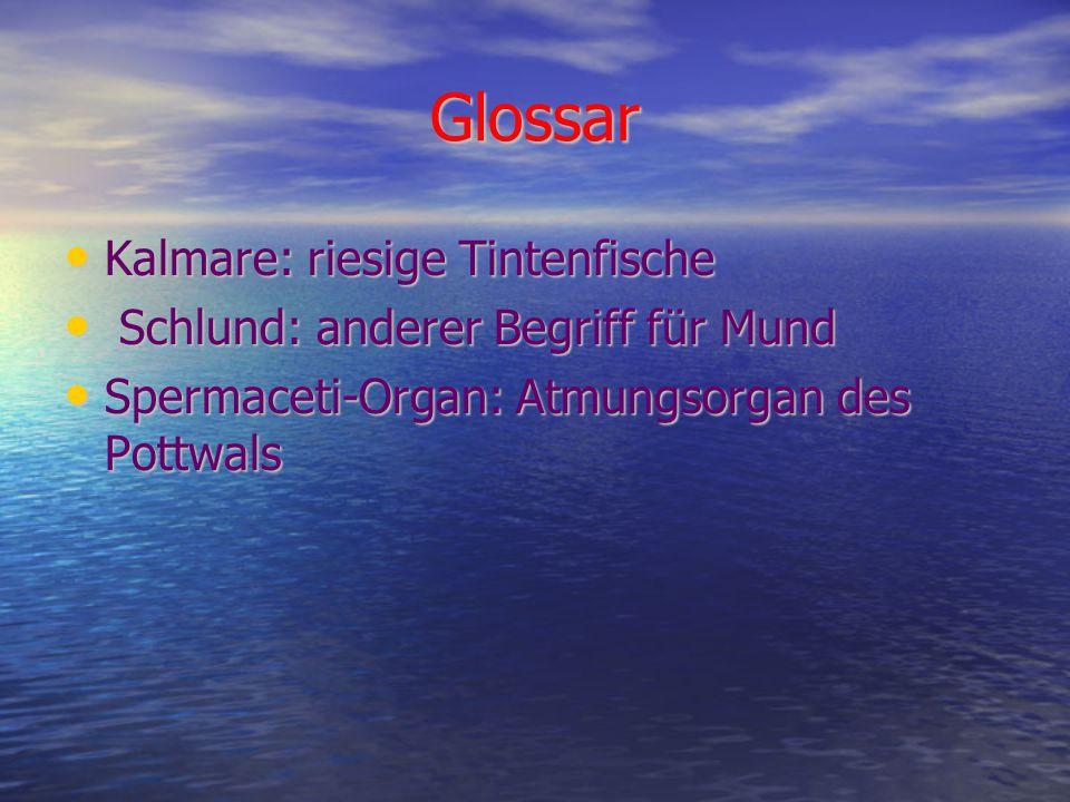 Glossar Kalmare: riesige Tintenfische Kalmare: riesige Tintenfische Schlund: anderer Begriff für Mund Schlund: anderer Begriff für Mund Spermaceti-Organ: Atmungsorgan des Pottwals Spermaceti-Organ: Atmungsorgan des Pottwals