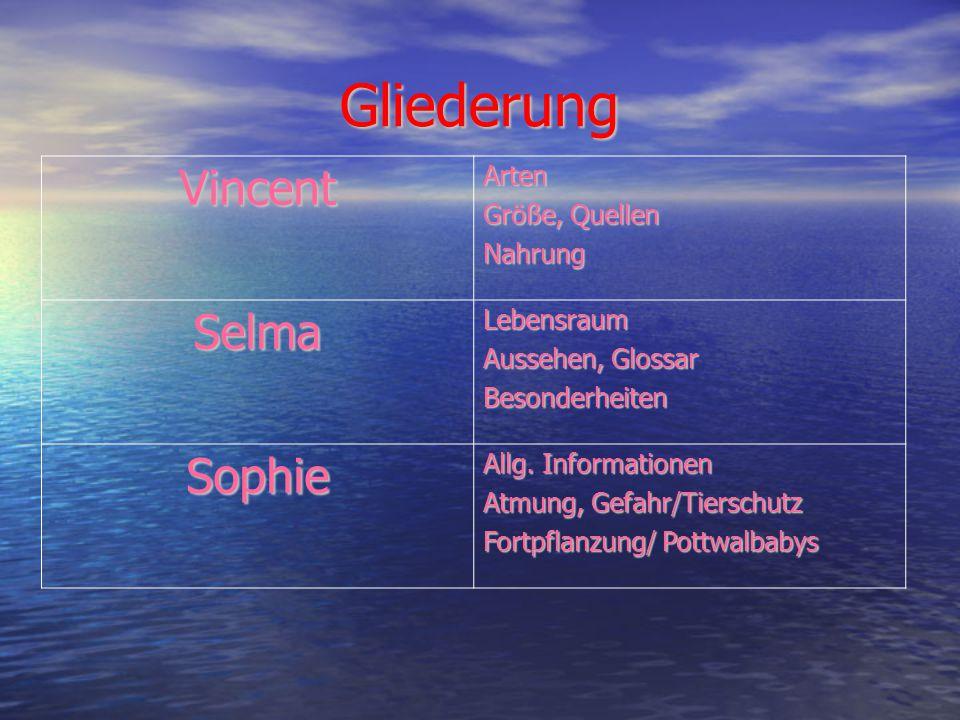Gliederung VincentArten Größe, Quellen Nahrung SelmaLebensraum Aussehen, Glossar Besonderheiten Sophie Allg.