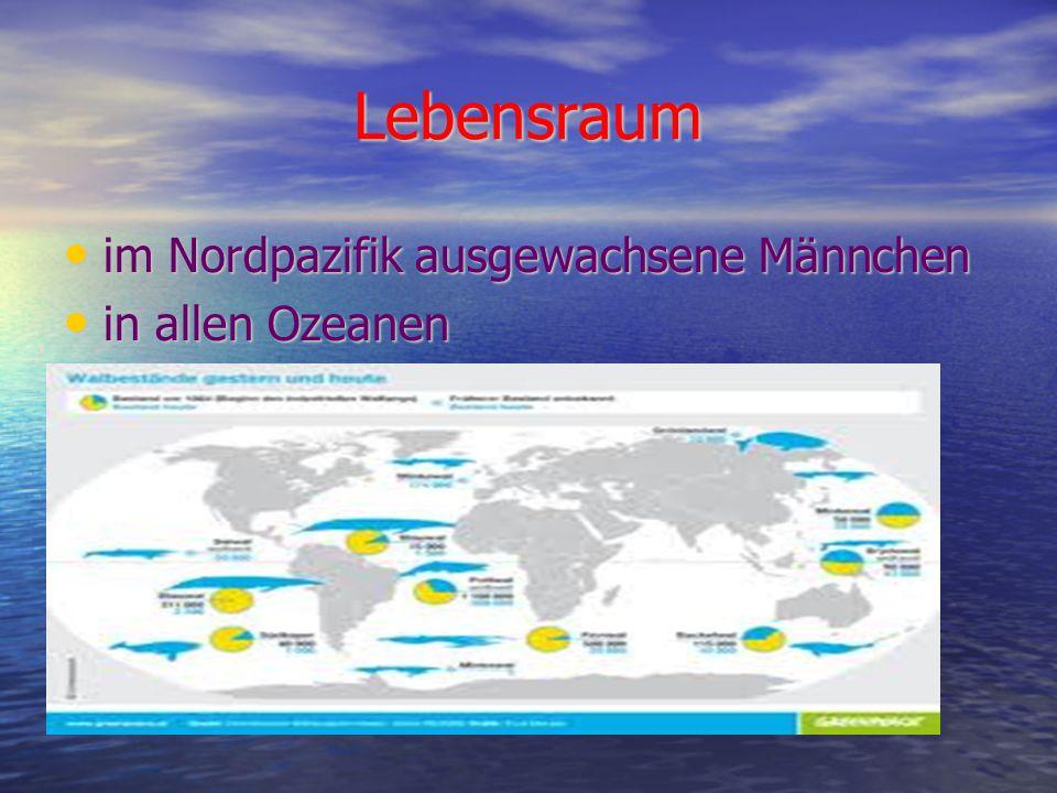 Lebensraum im Nordpazifik ausgewachsene Männchen in allen Ozeanen
