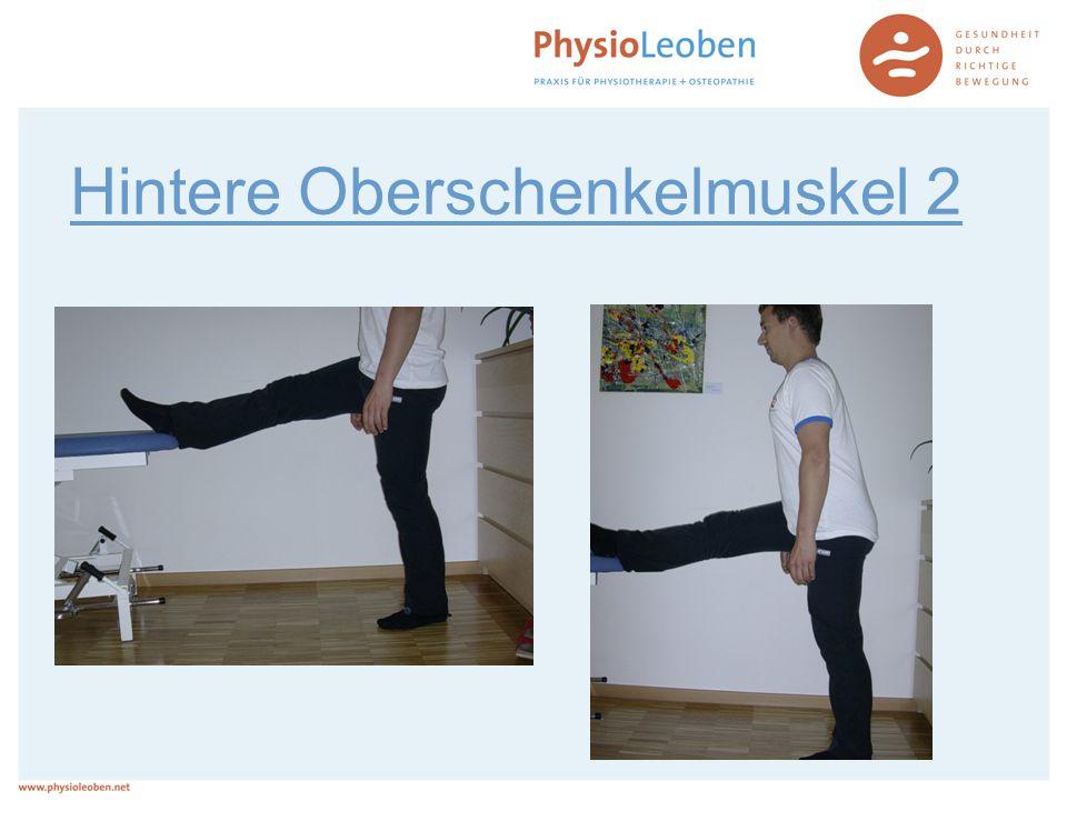 Hintere Oberschenkelmuskel 2