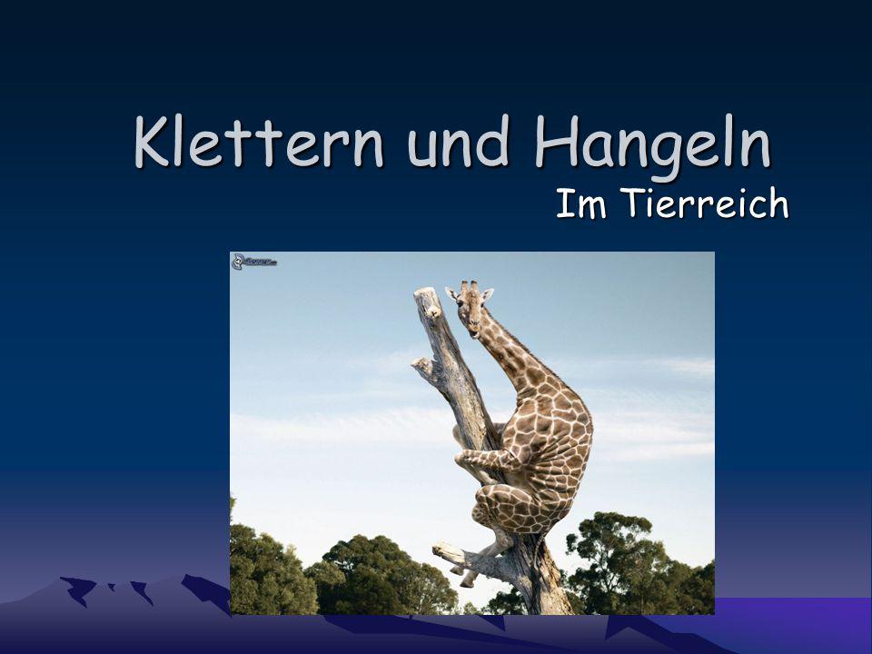 Klettern und Hangeln Im Tierreich