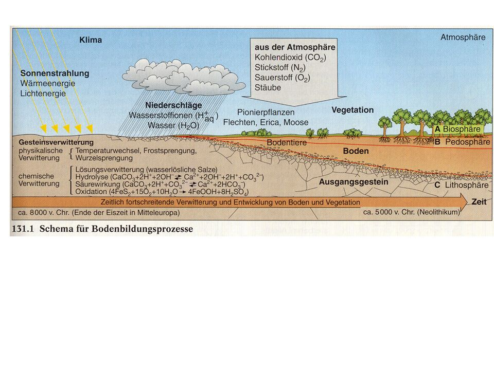 Bodenarten Bodentypen Sand Schluff Ton Lehm Grob Fein