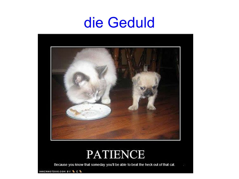 die Geduld Because you know that someday youll be able to beat the heck out of that cat.