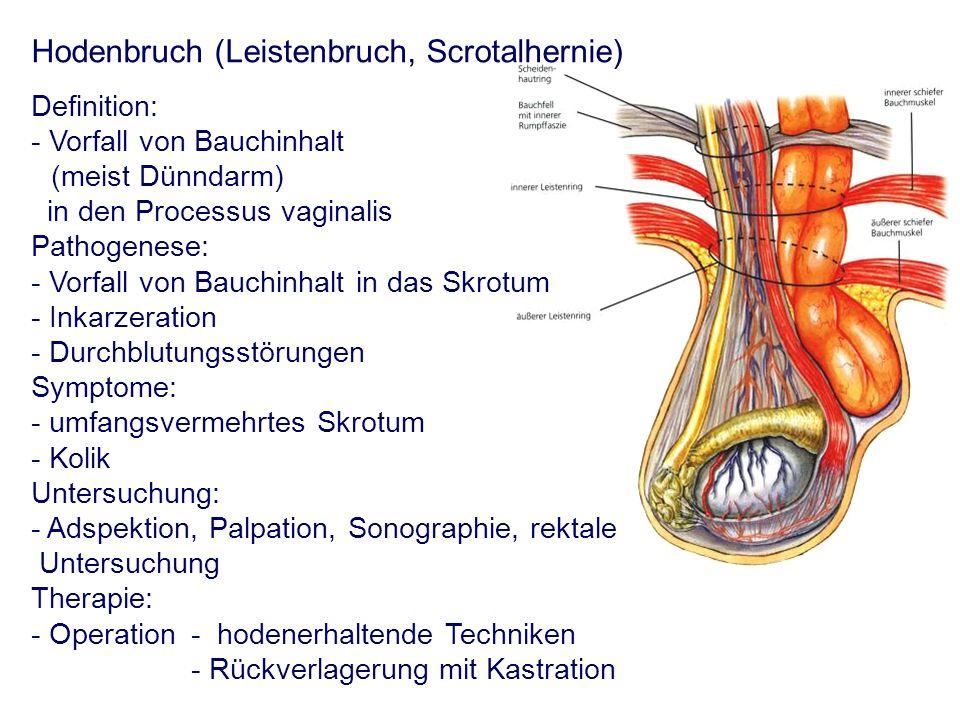 Vorlesung: Andropathologie - Systematik der Fortpflanzungsstörungen ...