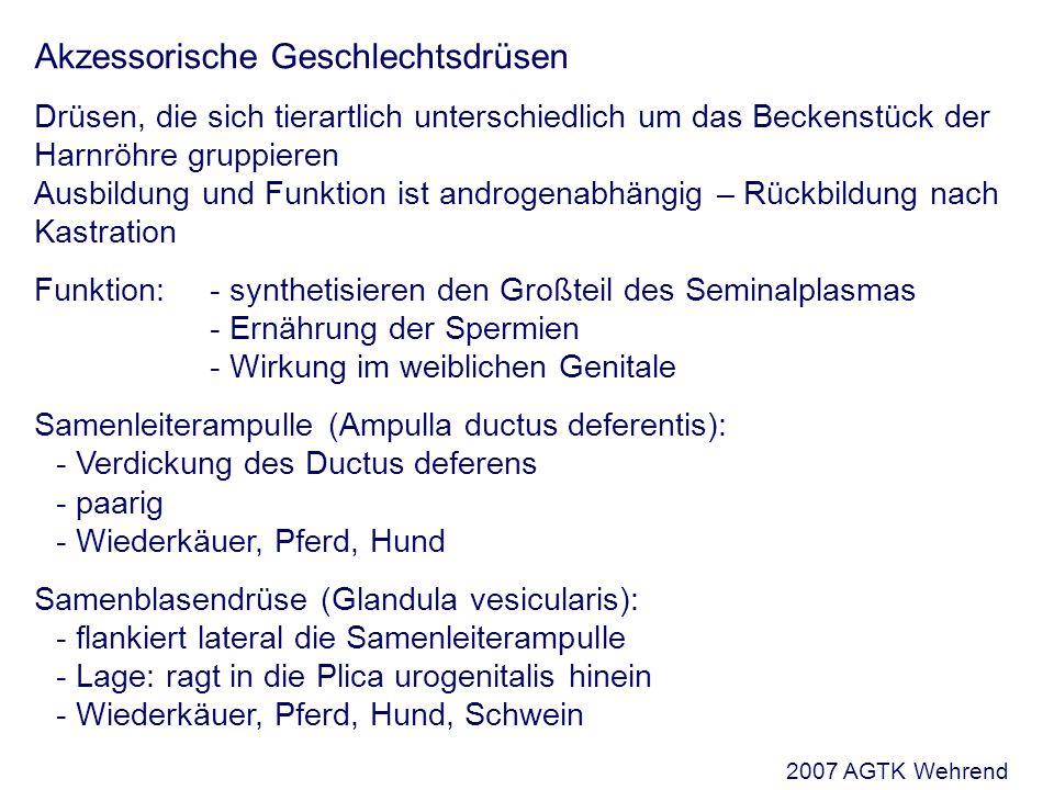 Vorlesung: Andropathologie Sommersemester 2007, 8. Fachsemester ...