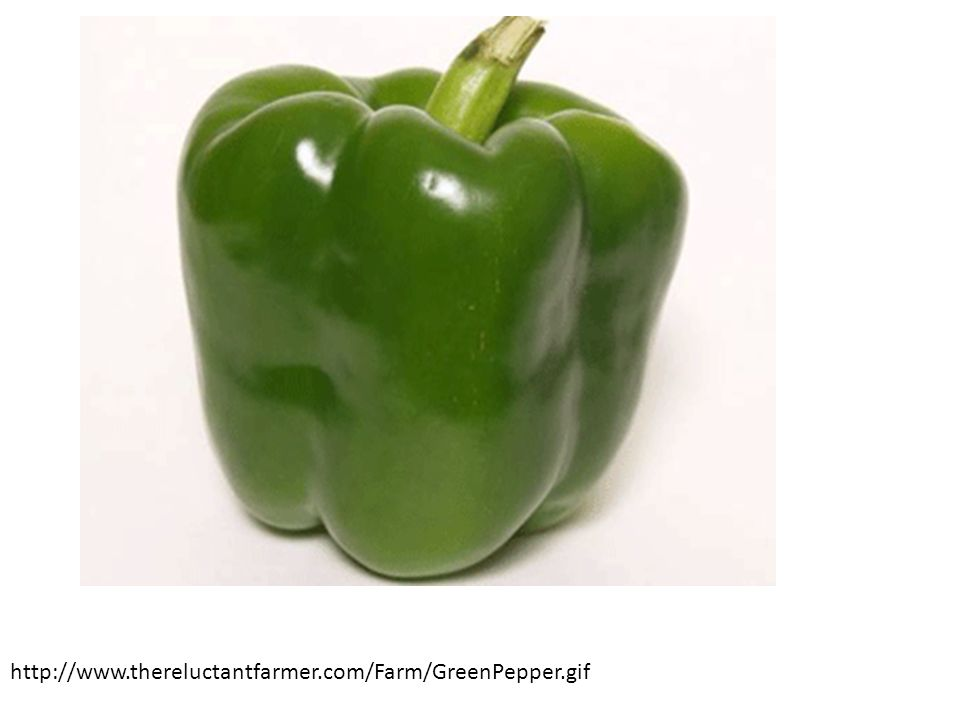 http://www.thereluctantfarmer.com/Farm/GreenPepper.gif