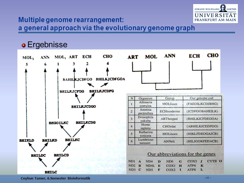 Ceyhun Tamer, 6.Semester Bioinformatik Multiple genome rearrangement: a general approach via the evolutionary genome graph Ergebnisse