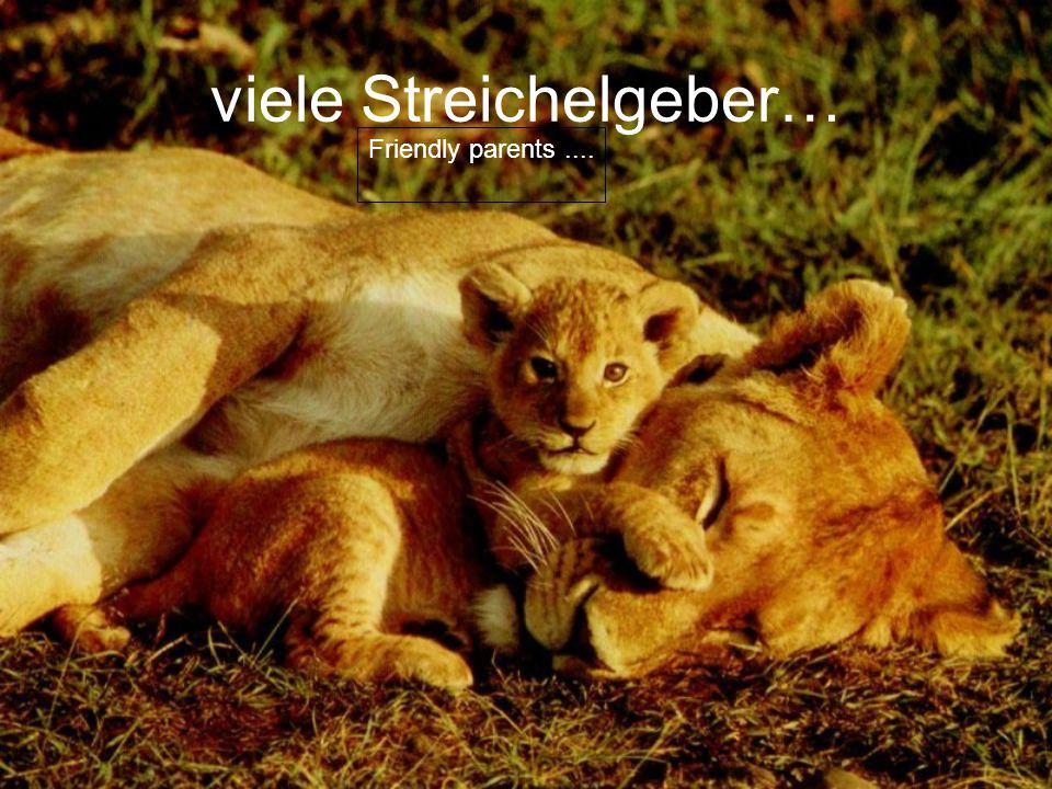viele Streichelgeber… Friendly parents....