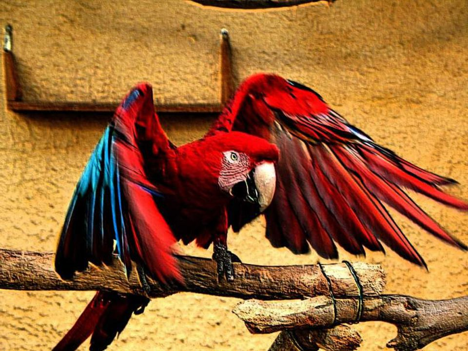 The parrot plays an important role in its habitat by helping to propagate the forest.