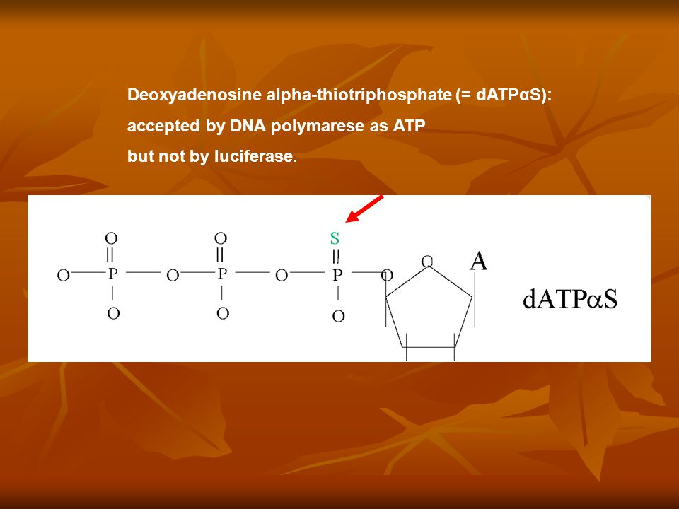 Key substrate: Deoxyadenosine alpha-thiotriphosphate (= dATPαS): accepted by DNA polymarese as ATP but not by luciferase.