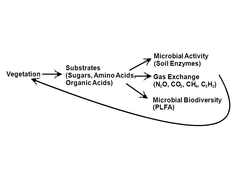 Vegetation Substrates (Sugars, Amino Acids, Organic Acids) Microbial Activity (Soil Enzymes) Gas Exchange (N 2 O, CO 2, CH 4, C 2 H 2 ) Microbial Biodiversity (PLFA)