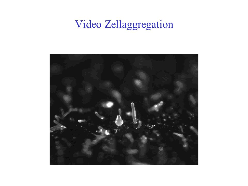Video Zellaggregation