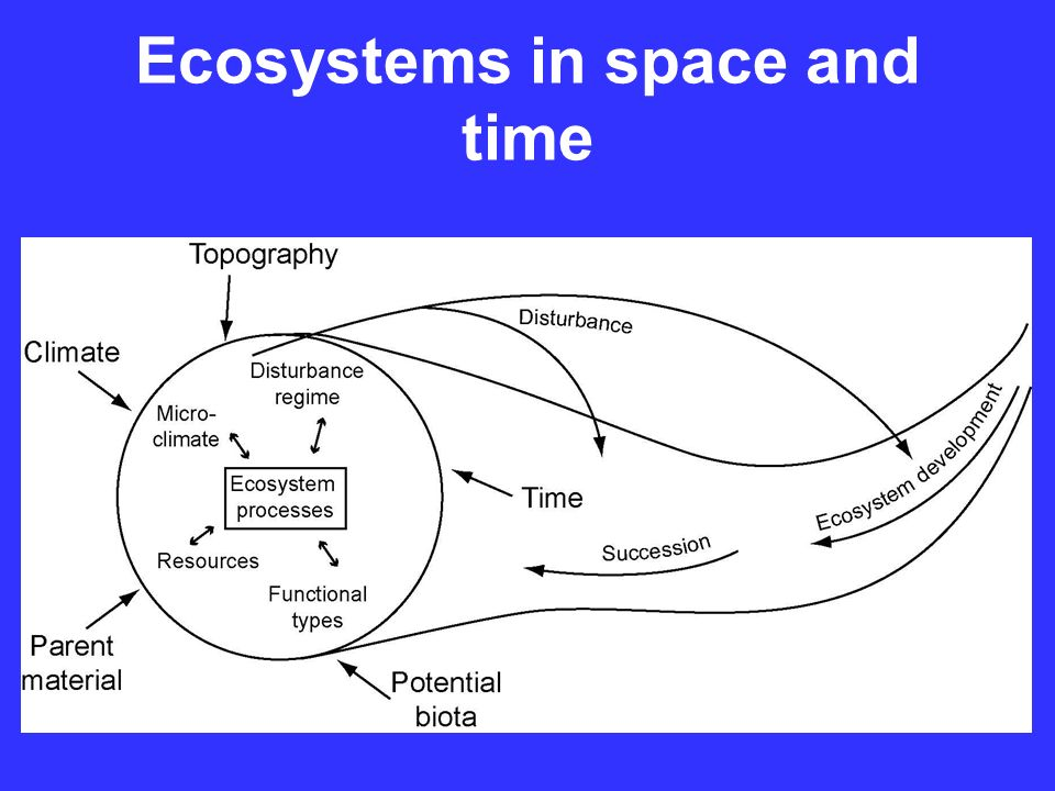 Ecosystems in space and time