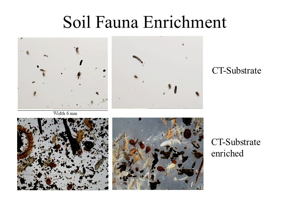 Soil Fauna Enrichment CT-Substrate CT-Substrate enriched Width 6 mm