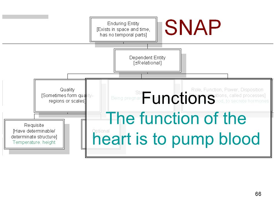 66 Functions The function of the heart is to pump blood