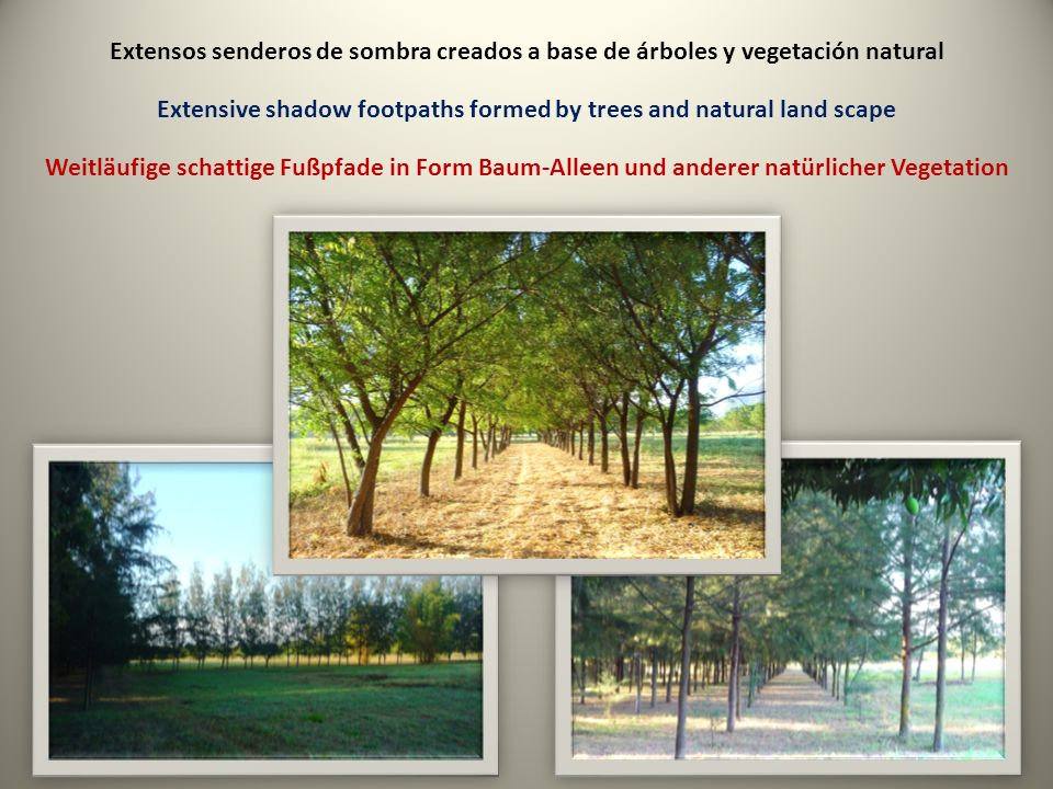 Extensos senderos de sombra creados a base de árboles y vegetación natural Extensive shadow footpaths formed by trees and natural land scape Weitläufige schattige Fußpfade in Form Baum-Alleen und anderer natürlicher Vegetation