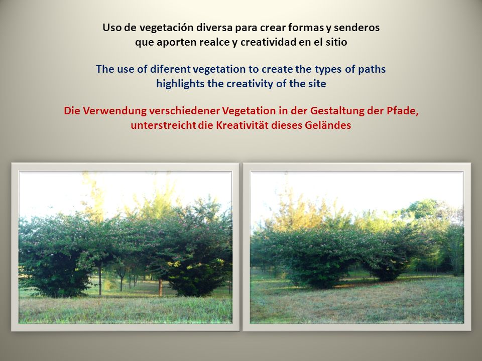 Uso de vegetación diversa para crear formas y senderos que aporten realce y creatividad en el sitio The use of diferent vegetation to create the types of paths highlights the creativity of the site Die Verwendung verschiedener Vegetation in der Gestaltung der Pfade, unterstreicht die Kreativität dieses Geländes