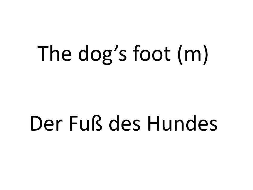 The dogs foot (m) Der Fuß des Hundes