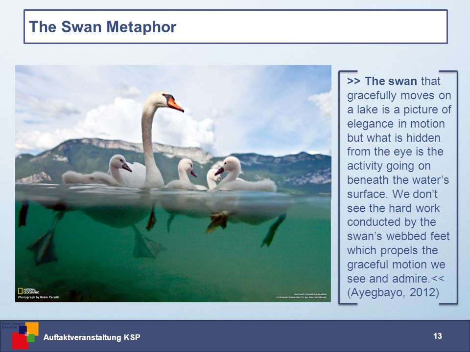 Auftaktveranstaltung KSP 13 The Swan Metaphor >> The swan that gracefully moves on a lake is a picture of elegance in motion but what is hidden from the eye is the activity going on beneath the water's surface.