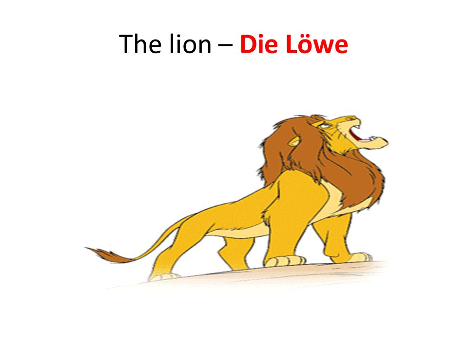 The lion – Die Löwe