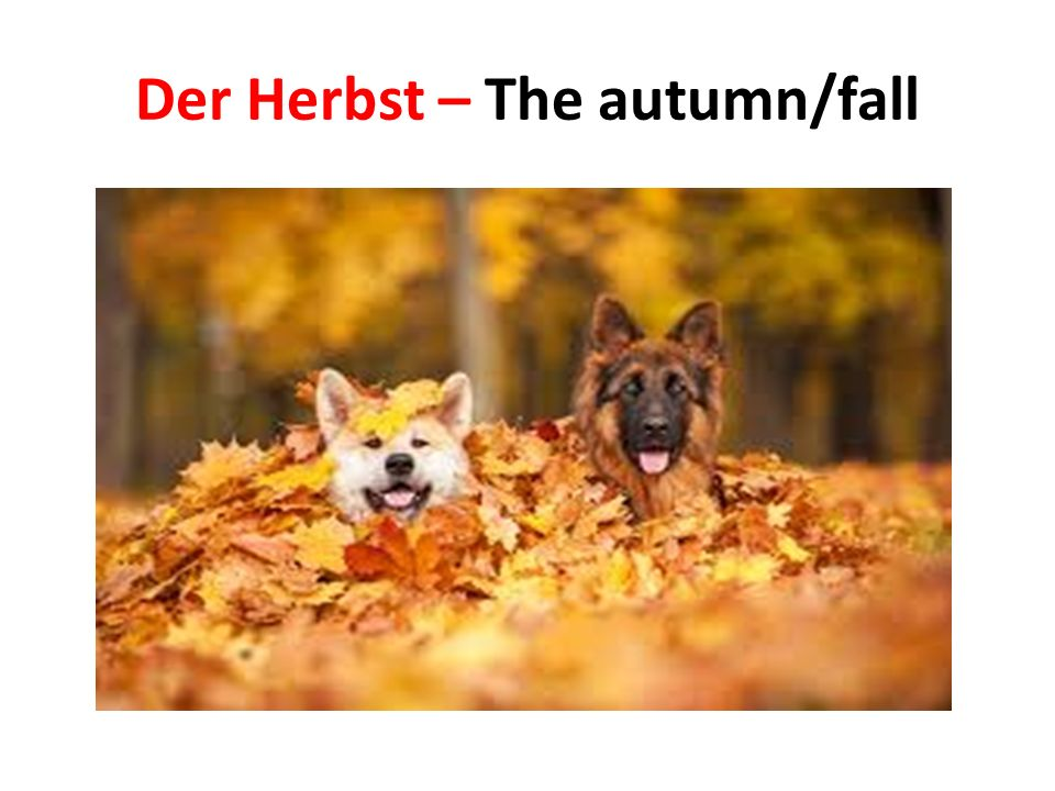 Der Herbst – The autumn/fall