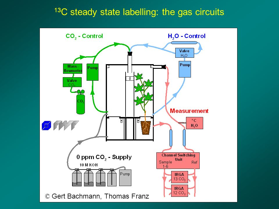 13 C steady state labelling: the gas circuits © Gert Bachmann, Thomas Franz