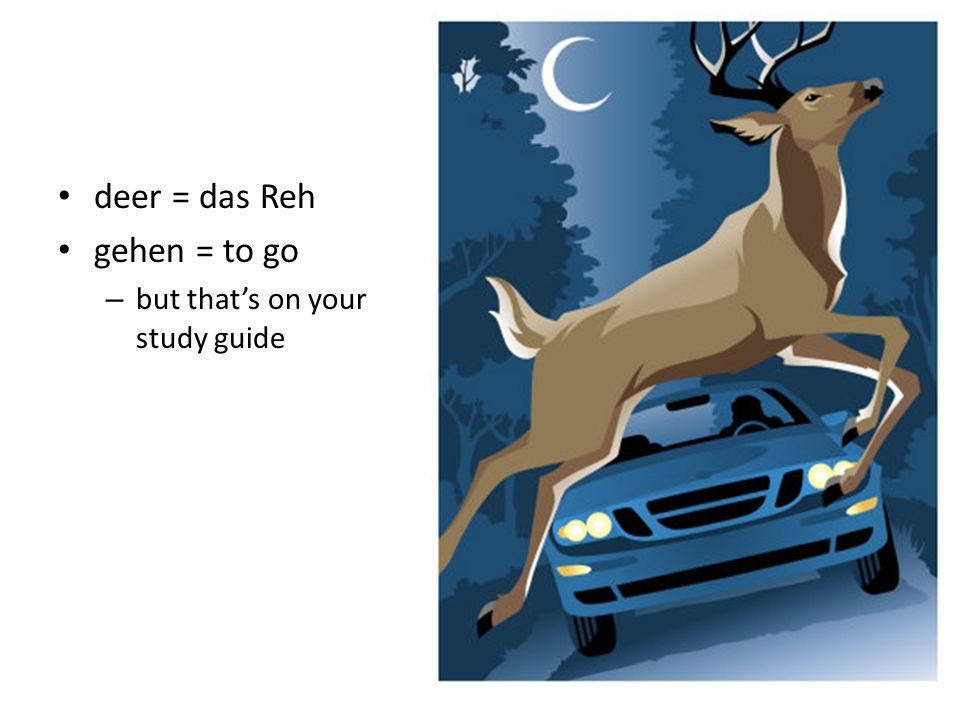 deer = das Reh gehen = to go – but thats on your study guide