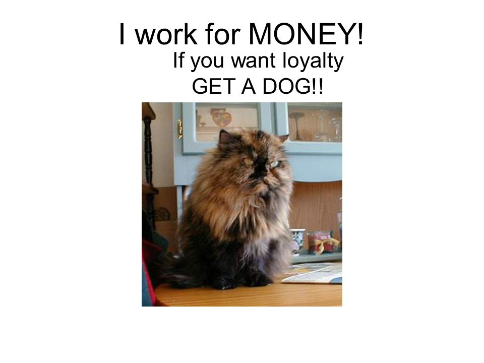 I work for MONEY! If you want loyalty GET A DOG!!