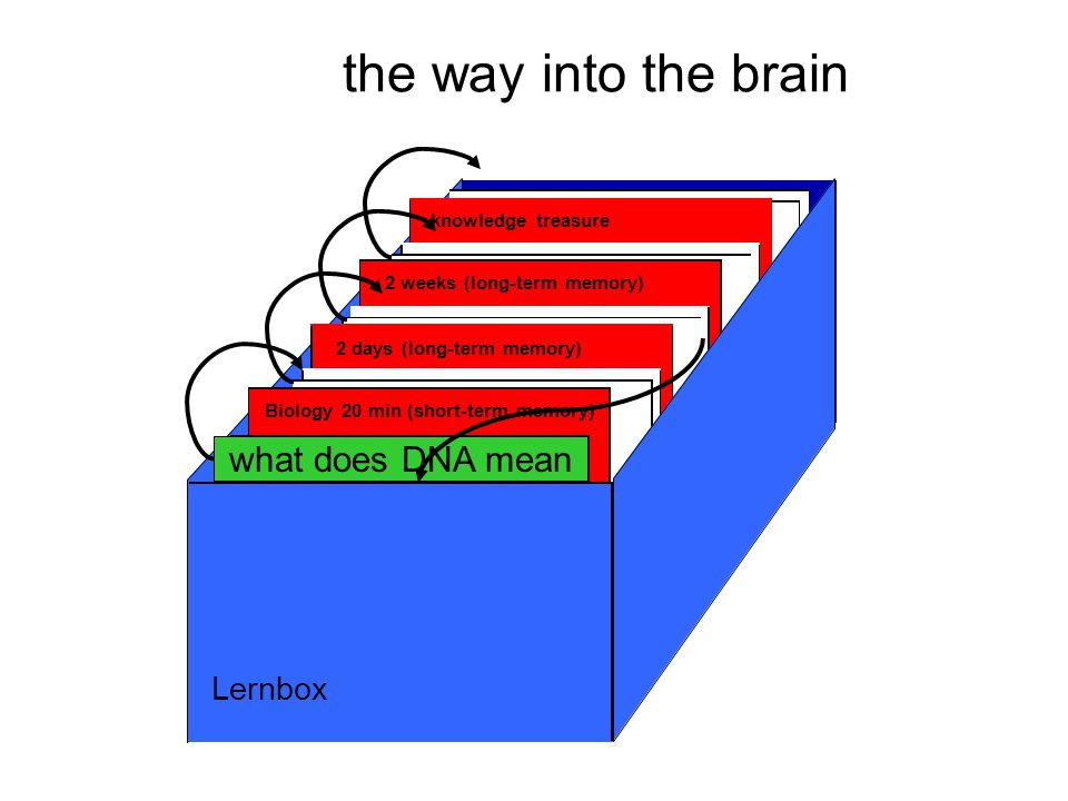 the way into the brain Neue Kärtchen (noch nicht gelernt) Biology 20 min (short-term memory) 2 days (long-term memory) 2 weeks (long-term memory) knowledge treasure Lernbox what does DNA mean