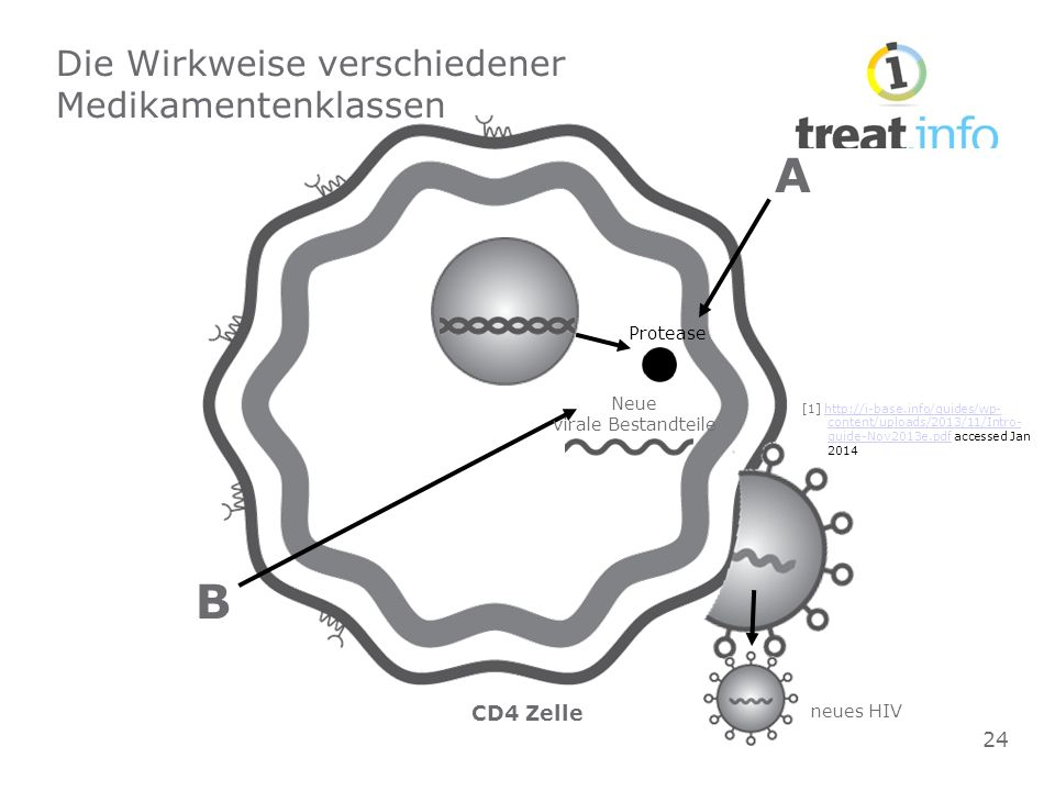 CD4 Zelle Die Wirkweise verschiedener Medikamentenklassen Protease A B Neue virale Bestandteile neues HIV 24 [1] http://i-base.info/guides/wp- content/uploads/2013/11/Intro- guide-Nov2013e.pdf accessed Jan 2014http://i-base.info/guides/wp- content/uploads/2013/11/Intro- guide-Nov2013e.pdf