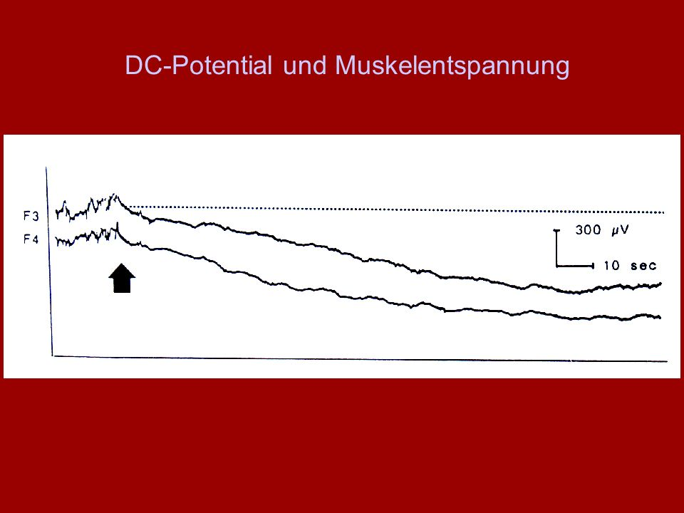DC-Potential und Muskelentspannung