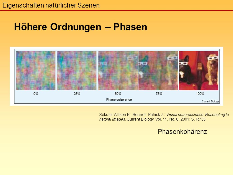 Phasenkohärenz Höhere Ordnungen – Phasen Eigenschaften natürlicher Szenen Sekuler, Allison B.; Bennett, Patrick J.: Visual neuoroscience: Resonating to natural images.
