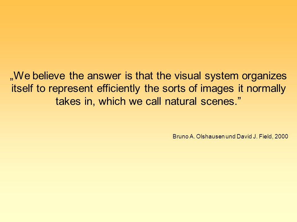 """We believe the answer is that the visual system organizes itself to represent efficiently the sorts of images it normally takes in, which we call natural scenes. Bruno A."
