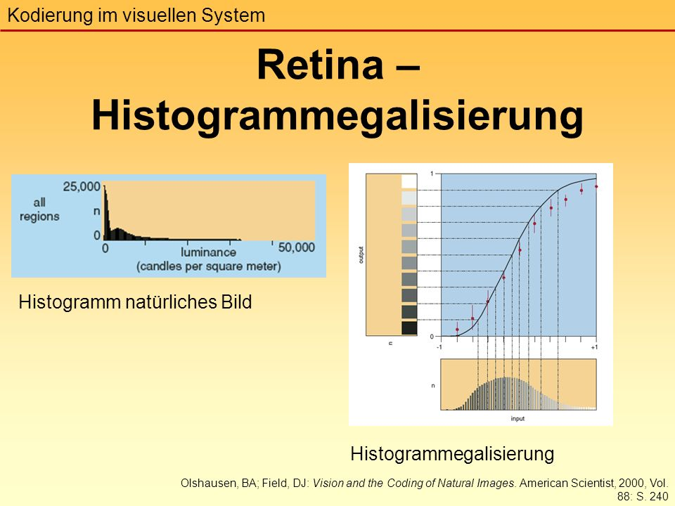 Retina – Histogrammegalisierung Kodierung im visuellen System Olshausen, BA; Field, DJ: Vision and the Coding of Natural Images.