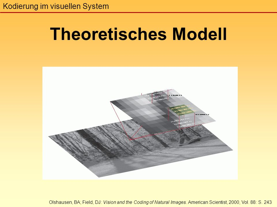 Theoretisches Modell Kodierung im visuellen System Olshausen, BA; Field, DJ: Vision and the Coding of Natural Images.