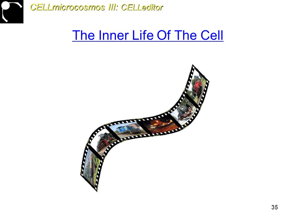 35 CELLmicrocosmos III: CELLeditor The Inner Life Of The Cell