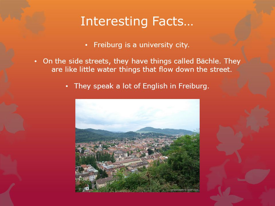 Interesting Facts… Freiburg is a university city.